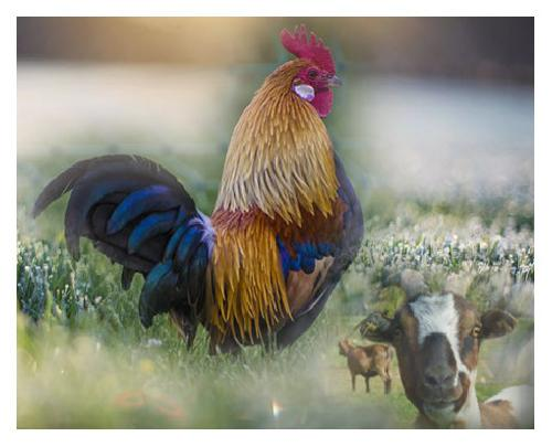 Ein Bauernhofleben - Paradies oder Hölle?